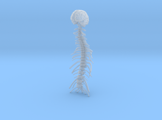 1/18 Brain and Spine