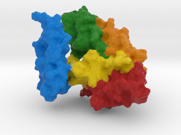 Heat Shock Protein  in Full Color Sandstone