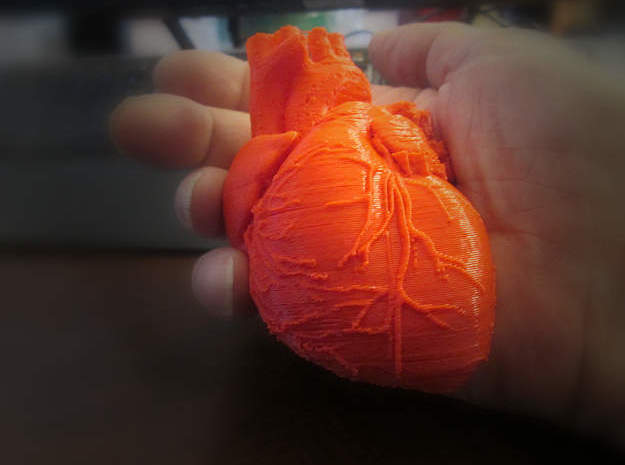 Heart Anatomical 90mm (scale is 1:1) in Red Processed Versatile Plastic