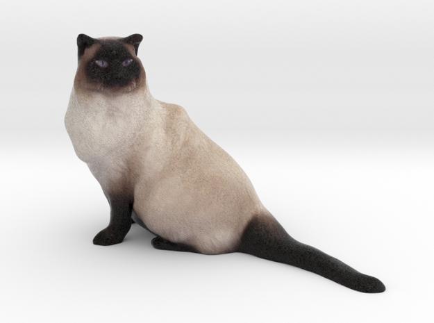 Birman Cat 001 in Full Color Sandstone