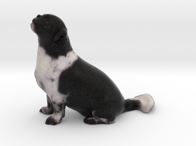 Black White Shih Tzu 001 in Full Color Sandstone