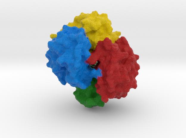 Hemoglobin ζ2 β2 in Full Color Sandstone