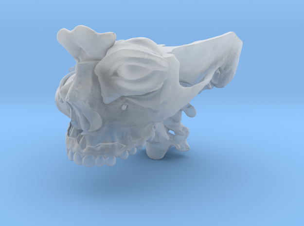 Subject 0.d | Calvarium+Teeth (Before) in Smooth Fine Detail Plastic