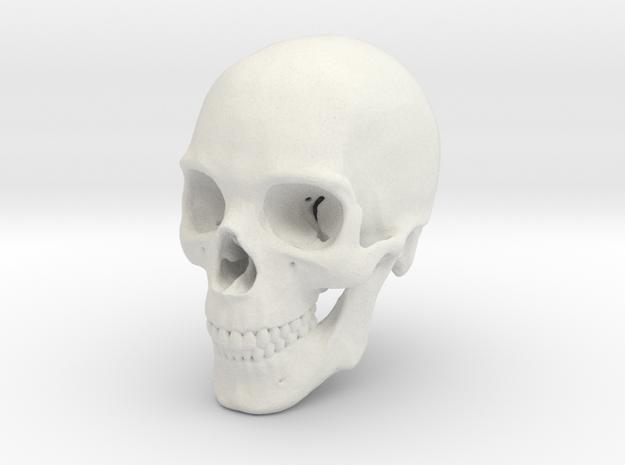 Human Skull 1:6 in White Natural Versatile Plastic