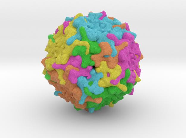 Human Bocavirus 1 in Full Color Sandstone
