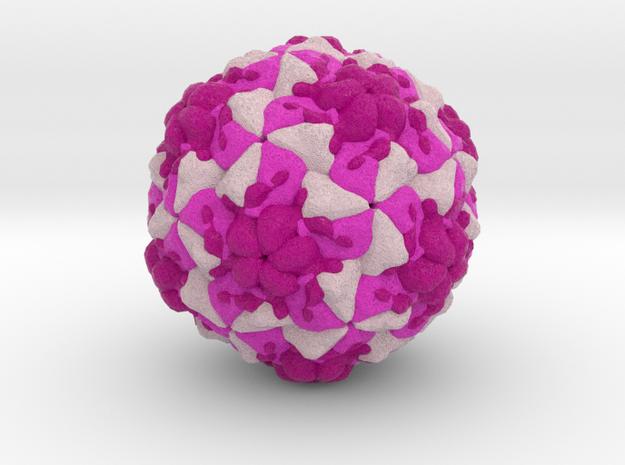 Rhinovirus Serotype 3 in Full Color Sandstone