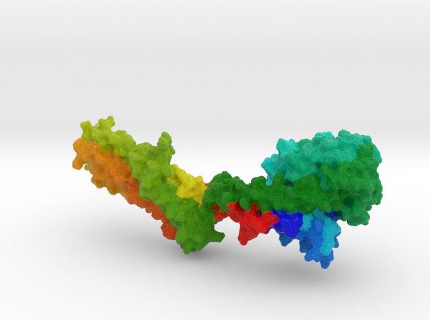 Human MxA Protein in Full Color Sandstone