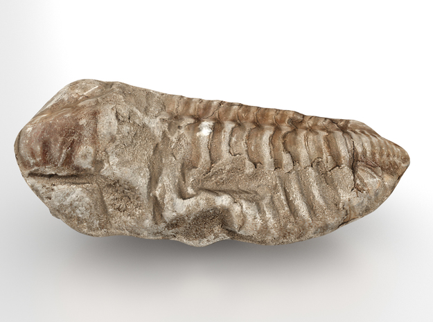 Trilobite - Fossil in Full Color Sandstone