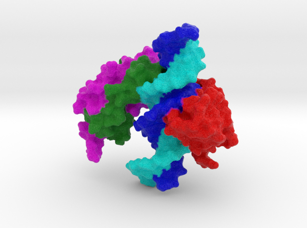 FOXP2 bound to DNA in Full Color Sandstone