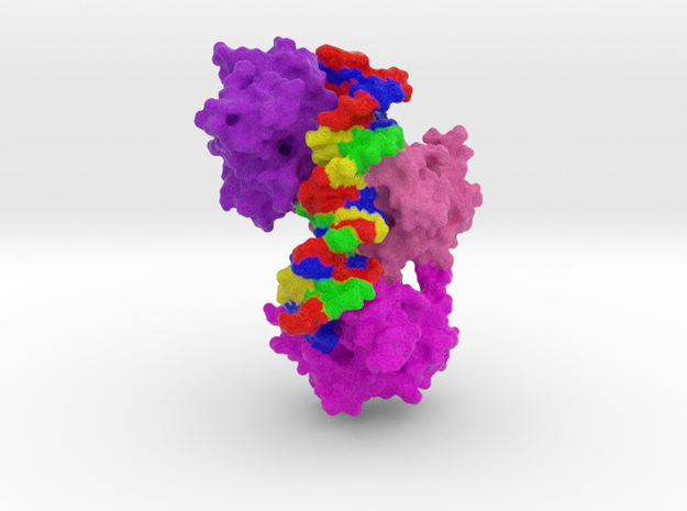 p53 complexed with DNA in Full Color Sandstone