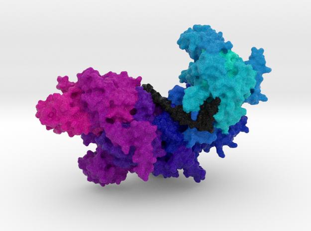 RecA bound to DNA in Full Color Sandstone