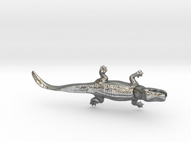 Bull-Gator in Polished Silver