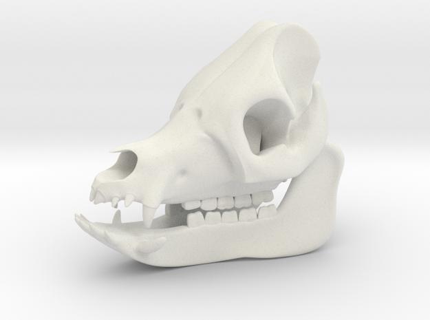 Pig Skull 3D Printed Model in White Natural Versatile Plastic