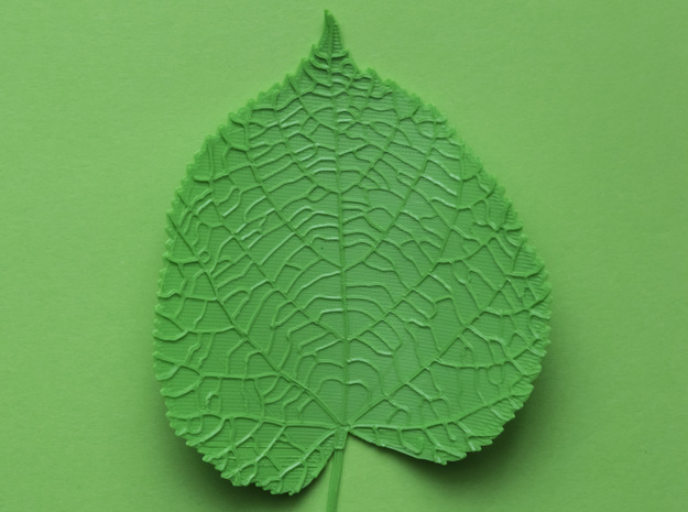Tilia tree leaf (linden leaf) in Green Processed Versatile Plastic
