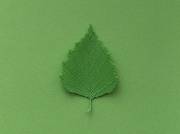 Birch tree leaf in Green Processed Versatile Plastic
