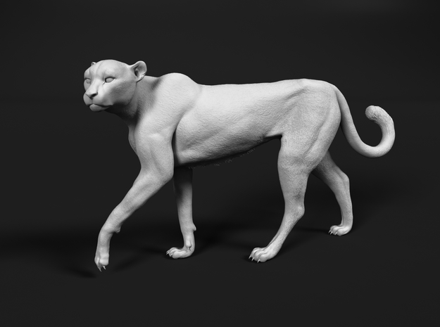Cheetah 1:20 Walking Female 3 in White Natural Versatile Plastic