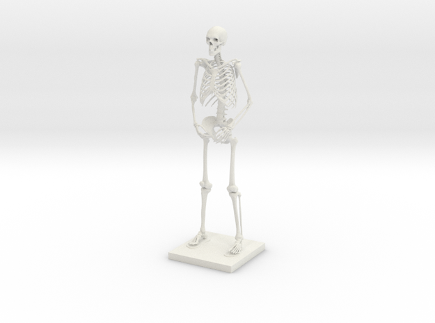 "10"" Desktop Skeleton in White Natural Versatile Plastic"