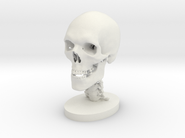 1/2 Scale Human Skull in White Natural Versatile Plastic