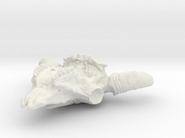60mm solid in White Natural Versatile Plastic