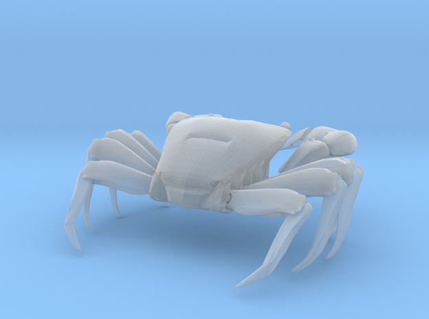 Articulated Crab (Pachygrapsus crassipes)