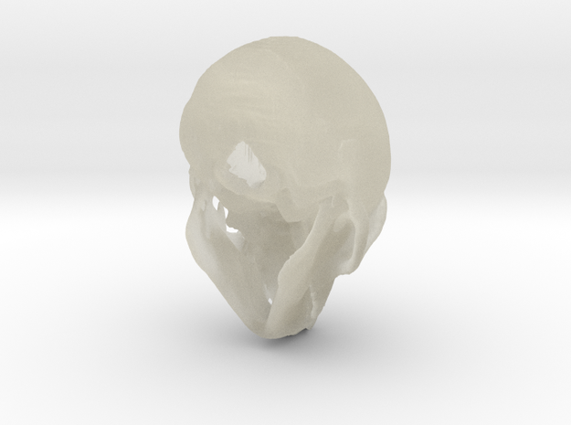 Spider Monkey Skull - 53mm 3d printed stainless steel print