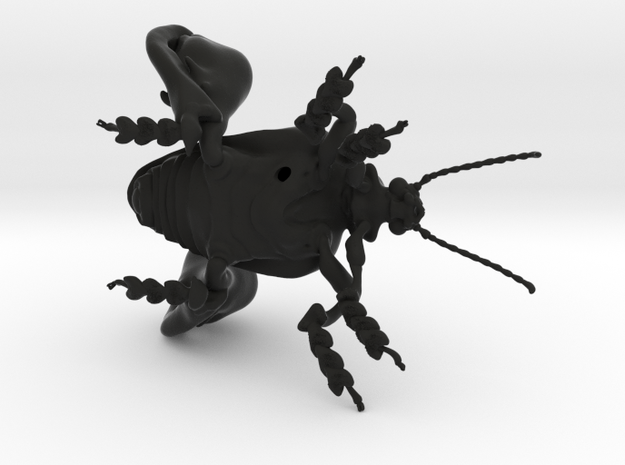 Frog-legged leaf beetle in Black Natural Versatile Plastic