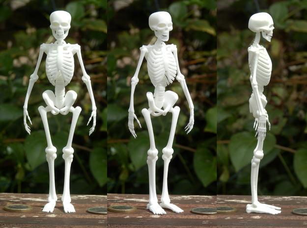 Free Standing Skeleton Figure in White Natural Versatile Plastic