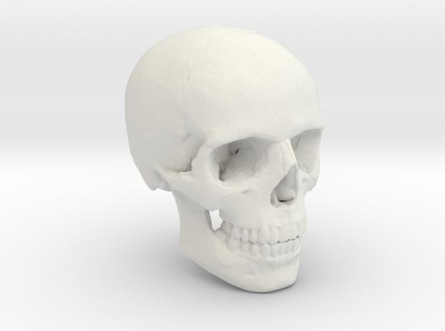 18mm 0.7in Human Skull Crane Schädel че́реп in White Natural Versatile Plastic