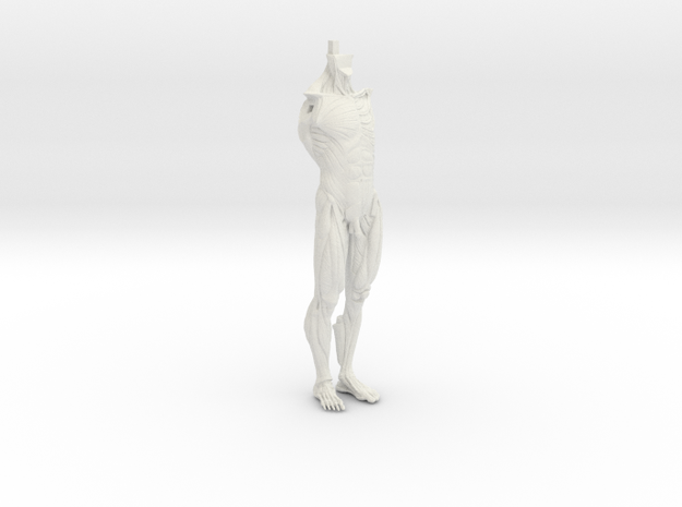 Anatomy Body in White Natural Versatile Plastic