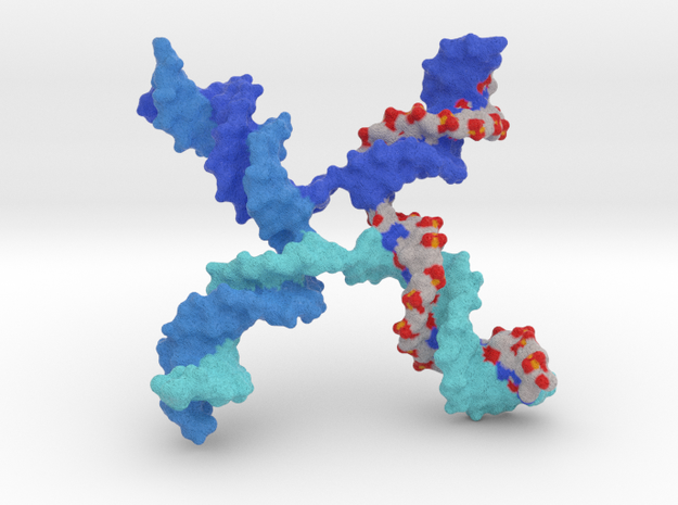 DNA - Holliday Junction in Full Color Sandstone