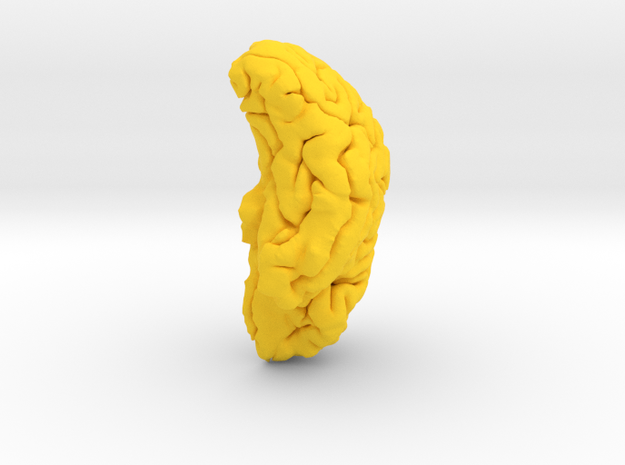 HK87 Right Hemisphere 100% 3d printed