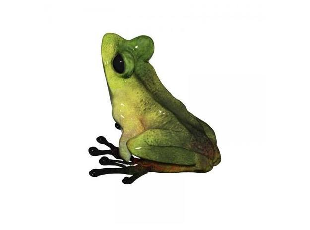 Tree Frog 5.6cm - Eric Thorsen 3d printed