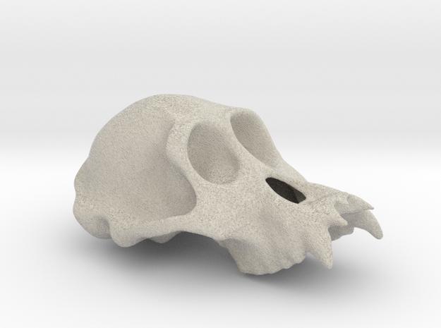 Orangutang ♂ cranium in Natural Sandstone