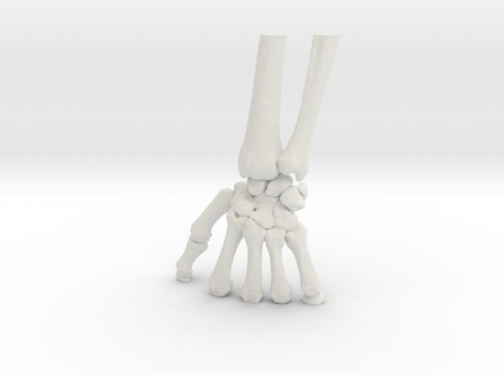Wrist Model (SKU 015) 3d printed