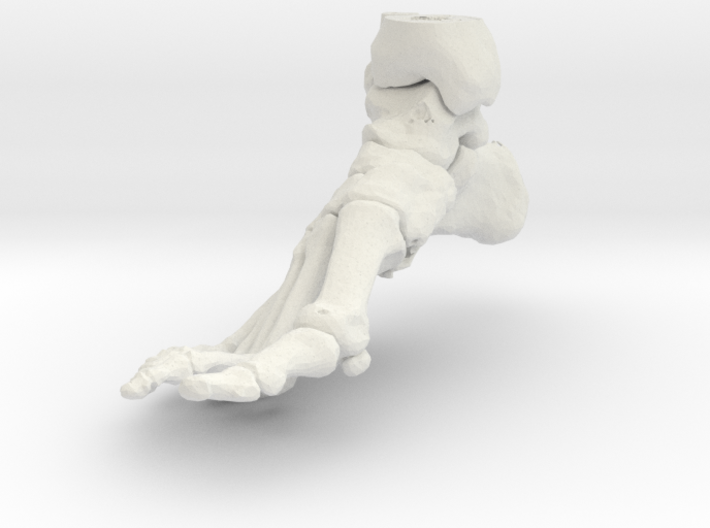 Foot and Ankle (SKU 015) 3d printed