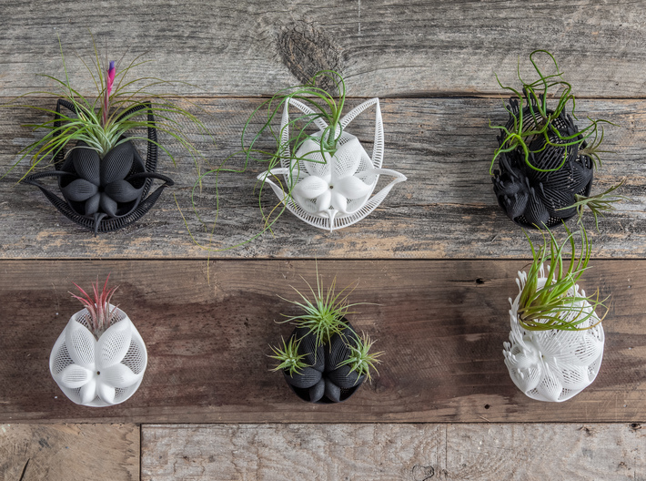 Bulbophyllum Plurispora Planter 3d printed More wall-hanging designs in this series