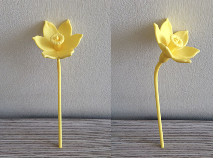 Narcissus Flower 3d printed Shapeways Print, Yellow Strong & Felxible