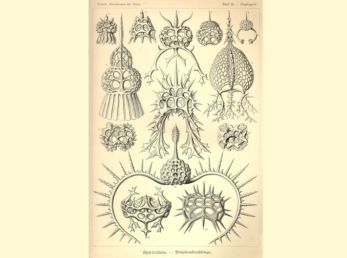 Spiroidea Radiolarian figurine 3d printed Ernst Haeckel's plate depicting the Spyroidea