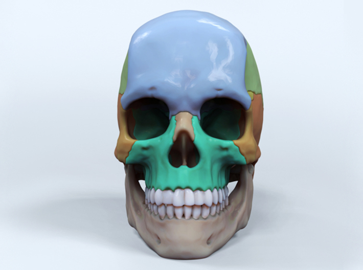 Artist Sculpted Skull For Reference 3d printed Digital render of front view