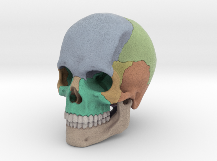 Artist Sculpted Skull For Reference 3d printed