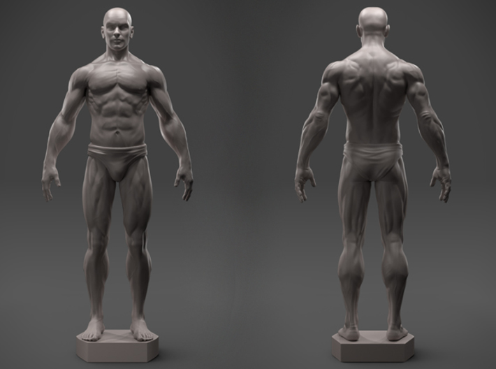 Male Anatomy Sculpture (MVY8M7U2C) by SculptorHec