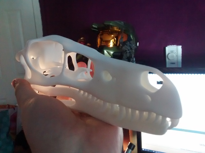 1:1 Velociraptor mongoliensis Skull and Jaw 3d printed Sclerotic rings not shown