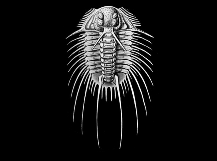 Aspidonia Trilobite Fossil pendant ~ 48mm tall 3d printed Acidaspis dufresnoyi from plate 47 of Haeckel's 'Kunstformen der Natur' (Art Forms of Nature) 1904