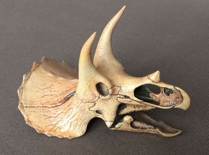 Triceratops skull - dinosaur model 3d printed Choose from 4 scales