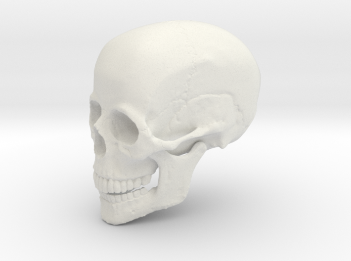 Non-scale Hollow Human Skull 3d printed