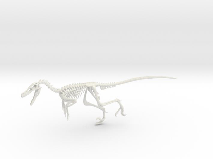 Velociraptor Skeleton 3d printed