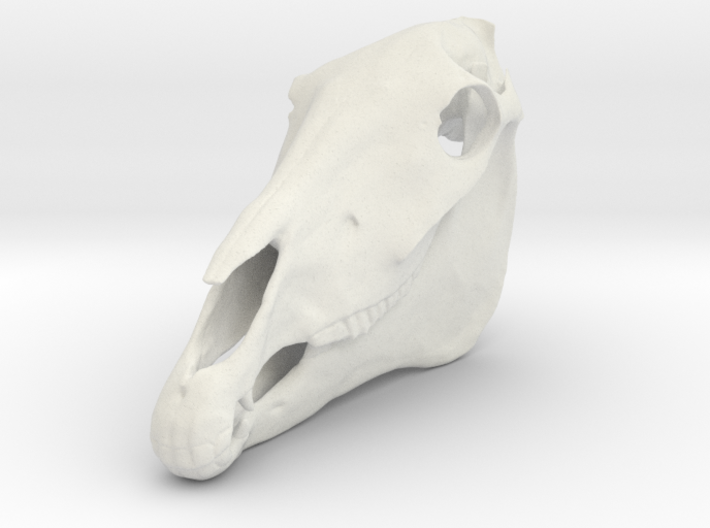 Horse Skull 4thScale 3d printed