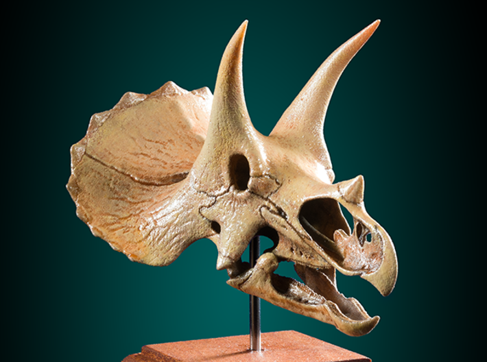 Triceratops - dinosaur skull replica 3d printed Accurate scale model