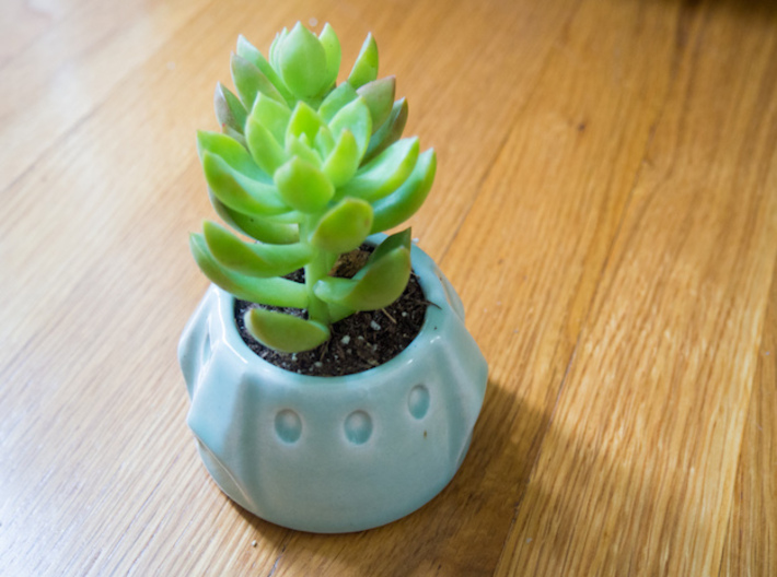 Baby Dragon Succulent 3d printed