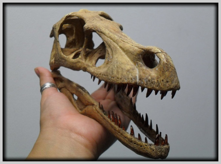 Dino Skull - Raptor Replica 3d printed REAL full sized museum exhibit NOT a 3D print !